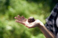 Hand ung kvinna som rymmer en snigel, natur, trädgård arkivbilder