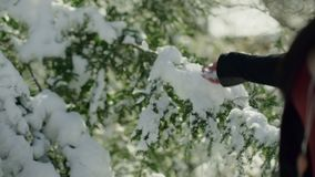 Hand of unrecognizable woman touching branch of evergreen tree with snow.
