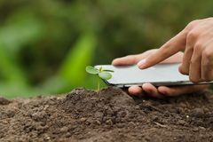 Hand unter Verwendung des Handys, der sorgfältig Sämlingspflanzenschutz überprüft Lizenzfreie Stockfotos