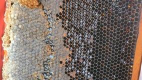 Hand unter Verwendung eines Messers, zum von Bienenwaben mit Honig in einem Rahmen zu verstopfen Imker Unseal Honeycomb stock footage