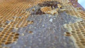 Hand unter Verwendung eines Messers, zum von Bienenwaben mit Honig in einem Rahmen zu verstopfen Imker Unseal Honeycomb stock video footage