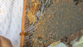 Hand using a knife to clog honeycombs with honey in a frame. Beekeeper Unseal Honeycomb. stock video footage
