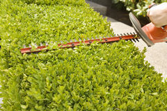 Hand Using Power Hedge Trimmer