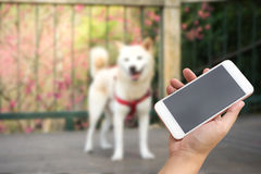 Hand using smartphone with blur dog outdoor background. Stock Photos
