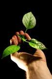 hand växten Arkivbild