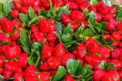 Hand valda jordgubbar av Mahabaleshwar, Indien Arkivfoto