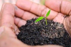 Hand van de spruitinstallatie van de landbouwersholding Het kweken van en het voeden van boom Royalty-vrije Stock Fotografie