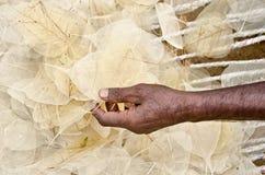 Hand van een mens die blad neemt stock afbeelding