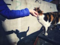 Hand van een mens die een kat strijken Royalty-vrije Stock Afbeelding