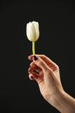 Hand van jonge vrouw met één bloem Royalty-vrije Stock Afbeeldingen