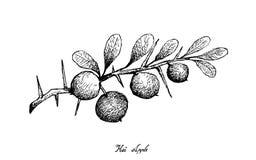 Hand van Kei Apple Fruits op Witte Achtergrond wordt getrokken die stock illustratie
