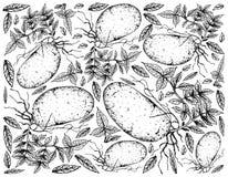 Hand van Verse Aardappels op een Witte Achtergrond wordt getrokken die royalty-vrije illustratie