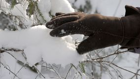 Hand in warm winter glove touching fresh fluffy snow on fir tree branches stock video