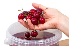 Hand with washed cherries Royalty Free Stock Photography