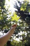 Hand wat betreft groene verse bladerenschaduw Royalty-vrije Stock Afbeelding
