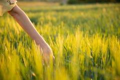 Hand wat betreft tarwearen met haar hand bij zonsondergang in gras stock fotografie