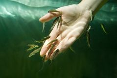 Hand in water with fishes. Spa procedure Royalty Free Stock Photography