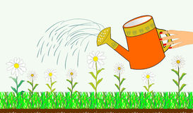 Hand watering can and flowers Stock Photos