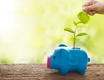 Hand and watering can, Sprout growing on colorful piggy bank on nature background Royalty Free Stock Image