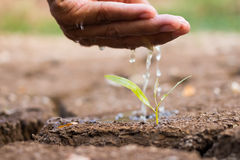 Hand watering the ground barren. Stock Images