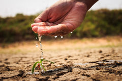Hand watering the ground barren. Hand watering the ground to dry Conservation Plant Royalty Free Stock Images