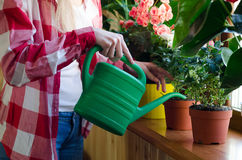 Hand watering a home plant with green can Royalty Free Stock Image