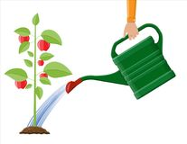Hand watering money fruit tree with can. Growth of plant, from sprout to fruit. Planting tree. Seedling gardening plant. Timeline. Vector illustration in flat Royalty Free Stock Photography