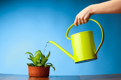 Hand watering a plant Stock Images
