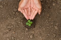 Hand watering small plant grow on ground stock image
