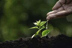 Hand watering small tree in the garden with sunshine.  stock photo
