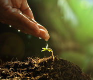 Hand watering to small plant. In the morning stock image