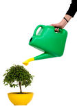 Hand watering a tree Royalty Free Stock Photography