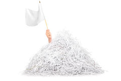 Hand waving white flag from pile of shredded paper. Isolated on white background Royalty Free Stock Image