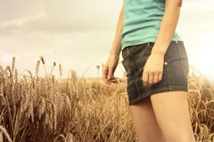 Hand in wheat field Royalty Free Stock Image