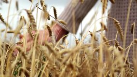 Hand on wheat stock video footage