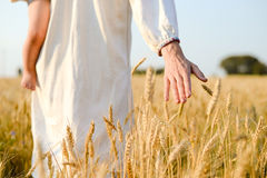 Hand with wheat on sunny day outdoors background Royalty Free Stock Photos