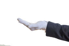 Hand in white glove Stock Photography
