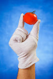 Hand in white glove holding red tomato Stock Photos