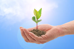 Free Hand With A Plant Stock Photos - 14230193
