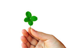 Hand With Clover Stock Image