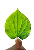 Hand With Leaf Royalty Free Stock Photography