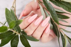 Free Hand With Long Artificial Manicured Nails Colored With Pink Nail Polish Royalty Free Stock Image - 213887356