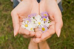 Hand of a woman. Holding flower head Royalty Free Stock Photo