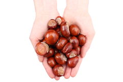 Hand of woman with chestnut with white background Royalty Free Stock Images