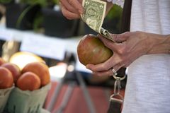 Hand of woman counting out US dollars as she holds a tomato shes getting ready to buy at a farmers market. The Hand of woman counting out US dollars as she holds stock images