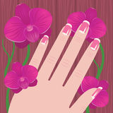 Hand of a woman with French manicure on a tree and pink orchid Royalty Free Stock Photos
