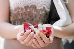 Hand of a woman full of rose petals, focus on petals Royalty Free Stock Photo