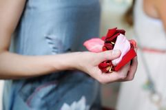 Hand of a woman full of rose petals Stock Photo