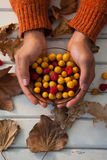 Hand of woman holding bowl of autumn berries. Close-up of woman hand holding bowl of autumn berries Royalty Free Stock Image