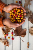 Hand of woman holding bowl of autumn berries. Overhead of woman hand holding bowl of autumn berries Stock Photography